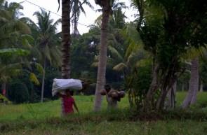 Indonezja.NEF-024