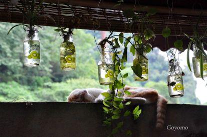 dujiangyan home cooking restaurant
