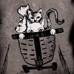 Gozo cat detectives