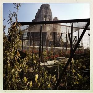 Clôtures, filets, grillages en contrebas du Grand Rocher, près de l'enclos du jaguar