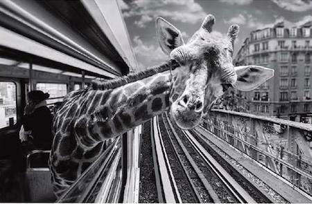 girafe-metro