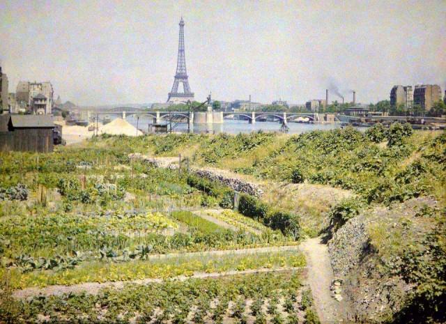 Jardins potagers, quai d'Auteuil (actuel quai Louis Blériot), XVI° Arr. –avec en face le pont de Grenelle, la statue de la Libertéet la Tour Eiffel –  le28 Juin 1918 – Photo Auguste Léon