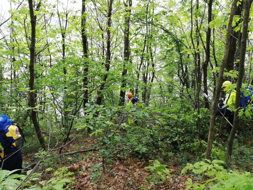 Ricerca in area boschiva