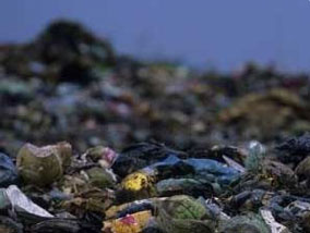 Evita mandar tu basura organica a los basureros, Mejor realiza composta