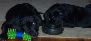 Puppy Pictures_0054