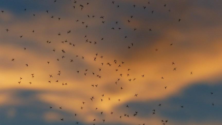 Запрашивање комараца почиње у недељу