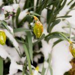Снег и слаб минус до недеље