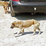Мале су разлике између псеће и људске судбине