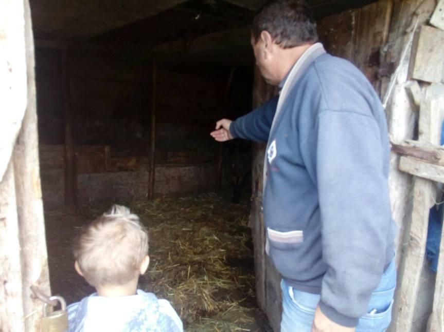 Крађе аутомобила, крава и телади у Великој Хочи