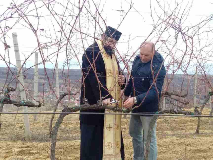 Vinogorje Velike Hoče i Orahovca: rezidba prvih čokota za Trifundan
