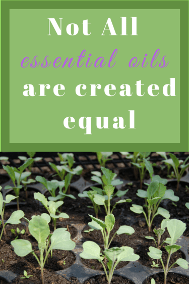 Not all essential oils are created equal. Learn why in this basic guide to oils.