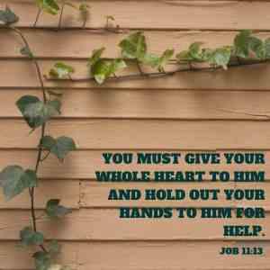 Job 11:13