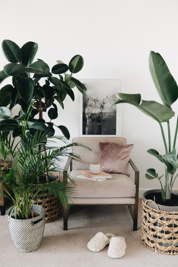 Graceful Blog - Botanical Interior - Plants