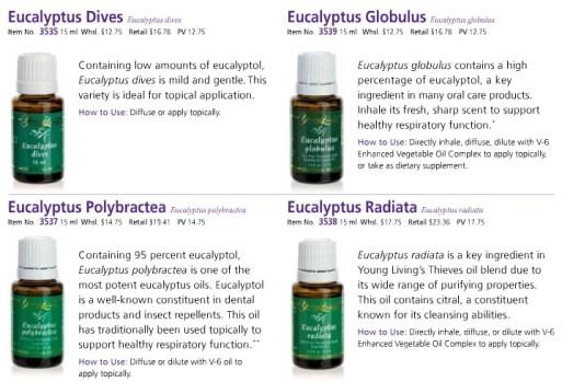 Eucalyptus bottles