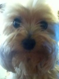 Pet Marking Be Gone
