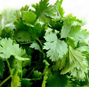 Did you know about Coriander?