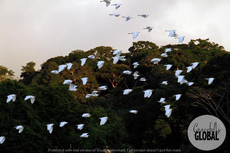 Birds along the shore at Laguna Catemaco in Veracruz, Mexico.