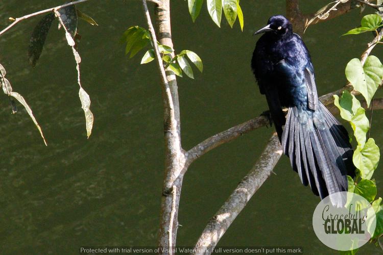 Birds at the sanctuary at Laguna Catemaco in Veracruz, Mexico.