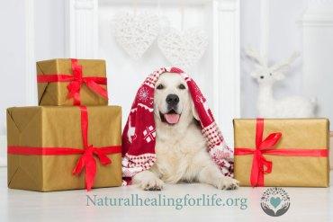 'Spiritual' Dog Training in Action
