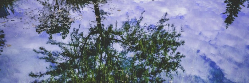 cropped-reflections4.jpeg