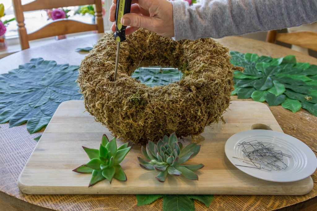 Drilling holes to plant your cuttings in your succulent wreath.