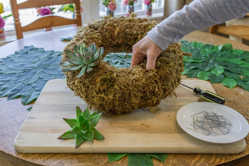 Drilling holes for cuttings in the succulent wreath.