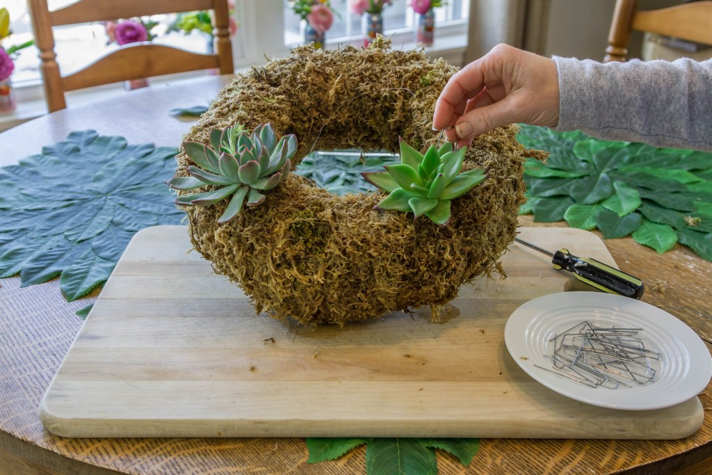 Fastening the cuttings to the succulent wreath with floral pins.