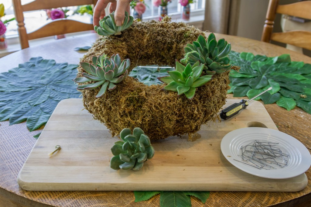Planting cuttings in my living succulent wreath.