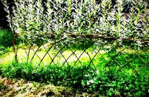 willow-fence