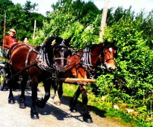 saving seeds Horse and Cart
