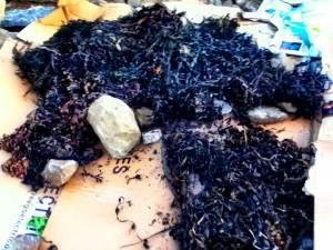 seaweed-on-cardboard