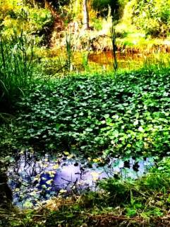 cottage gardens, a peaceful, natural pond