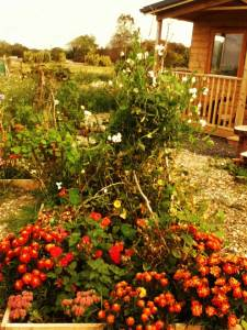 flowers in a raised bed illustrating an article about growing flowers