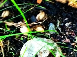 Wild mushrooms. Image of wild mushrooms