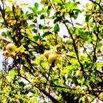 World food day. Image of apple tree