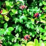 world food Day. Image of blackberries