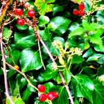 World Food Day. Image of Rosehips