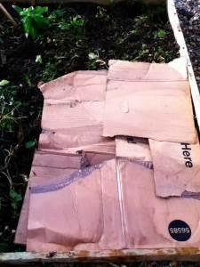 cardboard-on-soil
