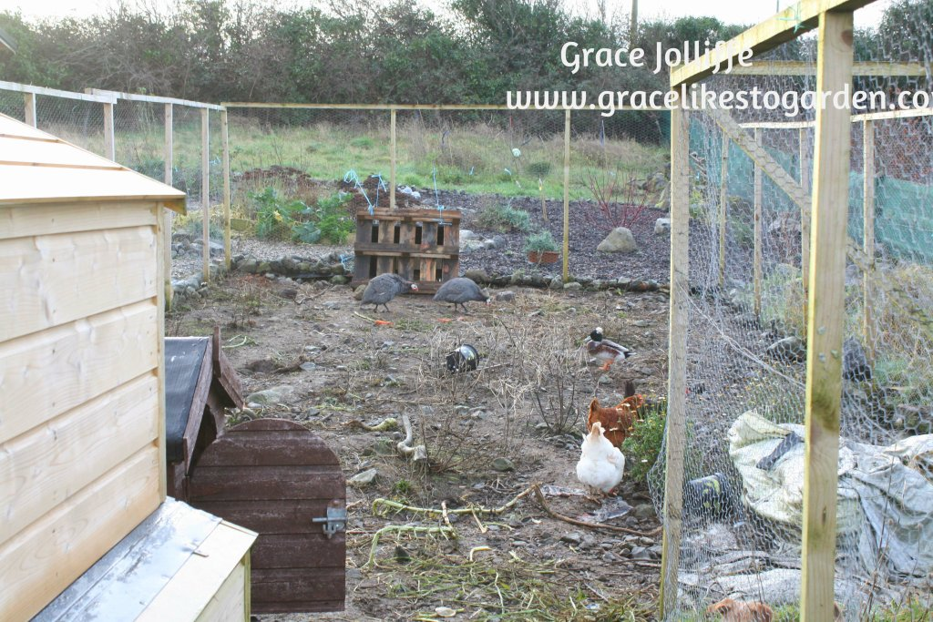chicken enclosure and chicken coup