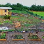 bare-garden