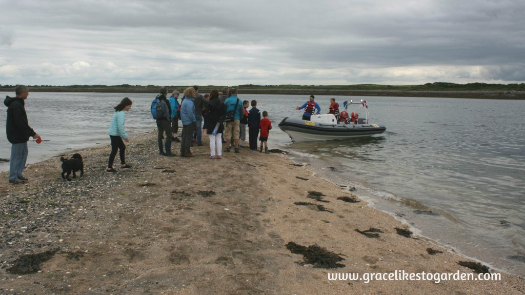 People waiting for a boat from Island Eddy beautiful causeway on Island Eddy illustrating an article about Wild Teasel