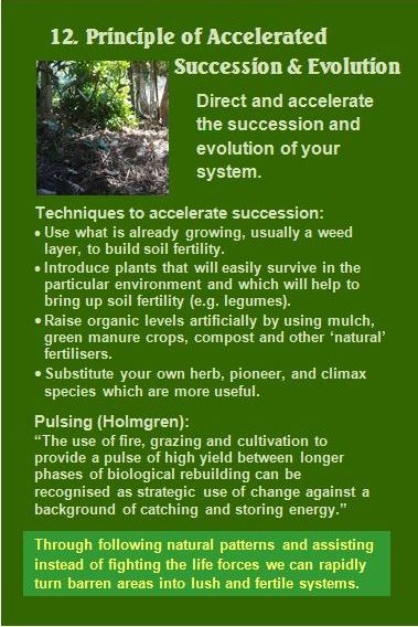 Principle of Accelerated Succession & Evolution Card 12