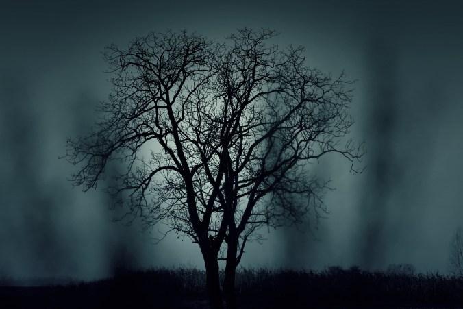 tree-407256