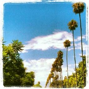 LA Palm