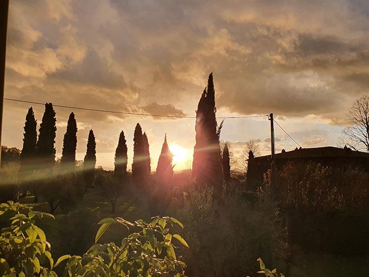 Fattoria Mansi Bernardini Italy garden Tuscany Italy (4)