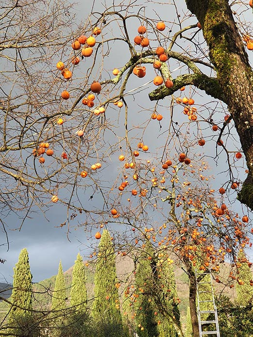 permissons-fruit