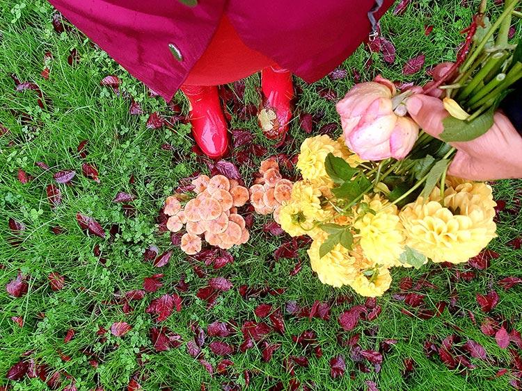 fashion nature flowers colour