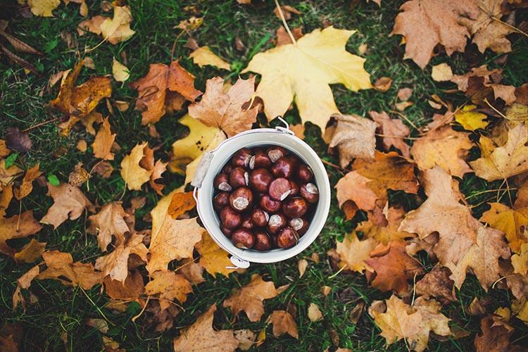 chestnuts vegan