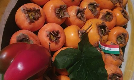 Persimmon Fruit – What To Use Them For