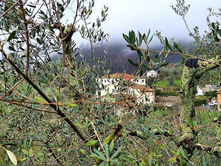 Tuscany Italy green Gracie Opulanza 2021 (3)